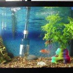 Cleaning and Maintaining a large Aquarium - Essential Guide