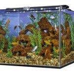 Perfecto 93 Gallon Frame-less Cube Aquarium - Review & Specs