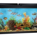 Top Fin 55 Gallon Aquarium Starter Kit - Review & Specs