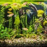 Introduction to essential Chemicals for a 75+ Gallon Fish Tank