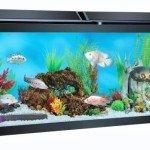 Top Fin 50 Gallon Hooded Aquarium Review & Specs
