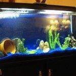 MarineLand Heartland 60 Gallon Aquarium Ensemble Review & Specs