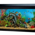 Top Fin 40 Gallon Hooded Aquarium Review & Specs