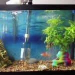 Best Aquarium Vacuum Cleaner & Fillers + Buyers Guide