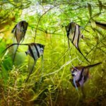 The Use of Live Feeder Fish in Saltwater Aquariums