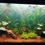 Best 55-Gallon Aquariums