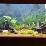 Best 75-Gallon Aquariums & Buyers Guide