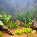 Best Aquarium Heater & Buyers Guide