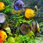 Best 50 Gallon Aquariums