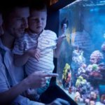 Best 120-Gallon Aquarium & Buyers Guide