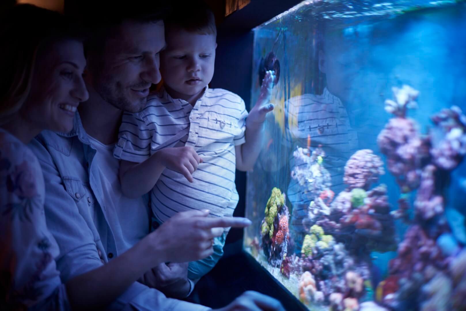 7 great 120 gallon aquariums