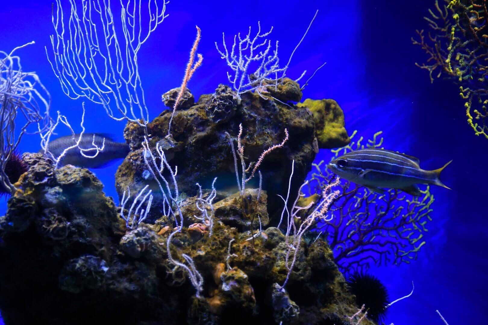 best saltwater aquarium