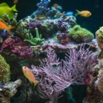 Best Nano Reef Tank & Buyers Guide