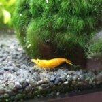 Best Shrimp Tank & Buyers Guide