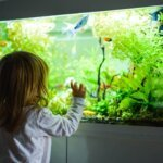 Best 30-Gallon Aquarium & Buyers Guide