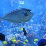 Best Aquarium Bubbler & Buyers Guide
