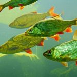 Why is Fish Tank Water cloudy?& How to solve this Problem