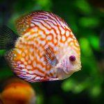 Best 180-Gallon Aquarium 2021 & Buyers Guide