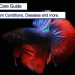 Betta Fish Complete Care Guide 2021