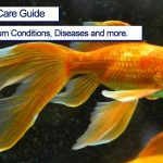 Goldfish Complete Care Guide 2021