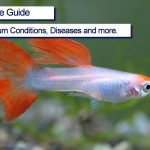 Guppy Complete Care Guide 2021