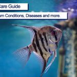 Angelfish Complete Care Guide 2021