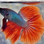 Do Betta Fish need a Filter?