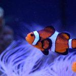 Best Aquarium Test Kits 2021 & Buyers Guide