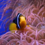 Why Your Fish Tank Smells? & How You Can Fix It