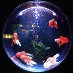 Is Hot Glue Aquarium safe?