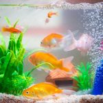 Best Aquarium Spray Bars 2021 & Installation Guide