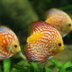 Best Aquarium Bio Balls 2021 & Handling Guide